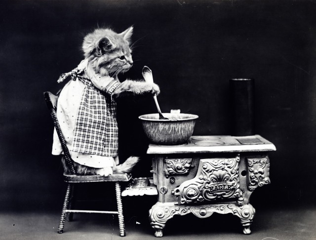 cat-dressed-vintage-photo-1393856213kEy